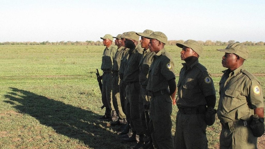 Rangers stand at the Gorongosa National Park in Mozambique, Wednesday, Nov. 30, 2016, which has been affected by conflict between Mozambique's government and the main opposition group, which has a stronghold in the Gorongosa area. Park managers say many of the 500 people working for the Gorongosa park back Renamo, the opposition, and some support Frelimo, the ruling party, though workers are discouraged from talking about politics on the job. (AP Photo/Christopher Torchia)