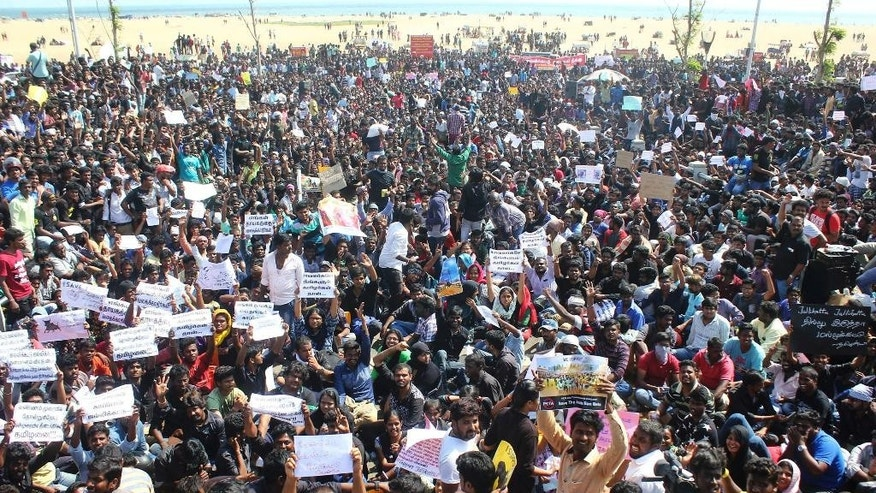 "Protestors gather at Marina beach demanding a ban be lifted on the traditional sport of bull-taming, or Jallikattu, in Chennai, India, Wednesday, Jan. 18, 2017. The sport of jallikattu, held during the four-day ""Pongal"" marking the winter harvest, involves releasing a bull into a crowd of people who attempt to grab it and ride it. It is popular in Tamil Nadu state but was banned by India's top court in 2014 after animal rights groups argued it was cruel to the animals. (AP Photo)"