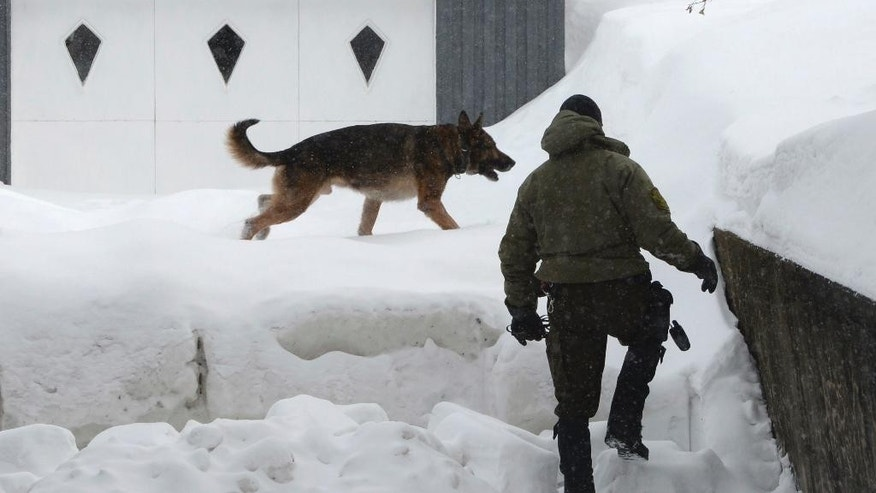 A police officer and police dog look for evidence near a home in the area of a Quebec City mosque on Monday Jan. 30, 2017. A shooting at a Quebec City mosque Sunday night left multiple dead and injured. One suspect was arrested at the scene and another nearby. (Paul Chiasson/The Canadian Press via AP)