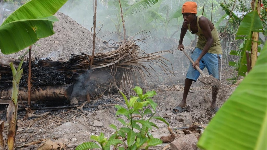 In this Monday, Jan. 23, 2017 photo, Jhonny Admeis scatters dirt on a smoldering earth kiln he and his neighbors made to make charcoal from fruit trees knocked down by Hurricane Matthew, in the outskirts of Les Cayes, Haiti. Hthe country has long had a reputation as an environmental wasteland, with numerous published reports asserting that the local charcoal industry has transformed the country into a moonscape of bedrock, with forest cover of only 2 to 4 percent. (AP Photo/David McFadden)