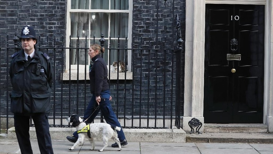 Larry the Downing Street cat watches as a police sniffer dog patrols the street, ahead of a visit by Prime Minister Benjamin Netanyahu of Israel with Britain's Prime Minister Theresa May at Downing Street in London, Monday, Feb. 6, 2017. (AP Photo/Kirsty Wigglesworth)