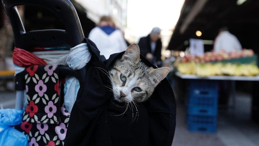 A cat is carried in a bag covered with a small blanket hanging from a shopping trolley while its owner buys goods at Varvakios market in Athens, Thursday, Feb. 16, 2017. (AP Photo/Thanassis Stavrakis)