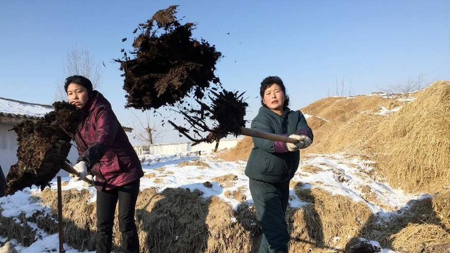 In this Monday, Jan. 23, 2017 photo, women farm workers shovel locally-produced Juche fertilizer at Migok Cooperative Farm near Sariwon, North Hwanghae Province, North Korea. With the ground still frozen as the North waits out its notoriously cold winters, farmers, joined by workers and students mobilized from the cities, are in the process of transporting truckloads of pungent fertilizer to fields across the country for the planting season ahead. (AP Photo)