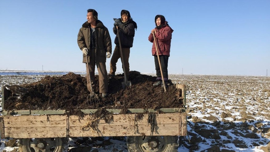 In this Monday, Jan. 23, 2017 photo, a group of farm workers stand on locally-produced Juche fertilizer before starting to shovel it off the back of a truck onto a frozen rice field at Migok Cooperative Farm near Sariwon, North Hwanghae Province, North Korea. With the ground still frozen as the North waits out its notoriously cold winters, farmers, joined by workers and students mobilized from the cities, are in the process of transporting truckloads of pungent fertilizer to fields across the country for the planting season ahead. (AP Photo)
