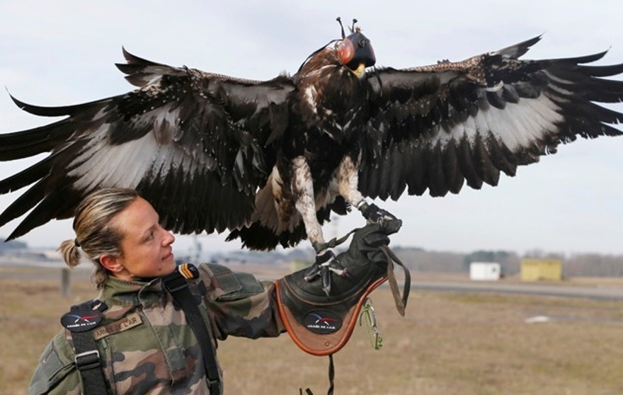 A French army falconer works with a golden eagle as part of a military training for combat against drones in Mont-de-Marsan French Air Force base, Southwestern France, February 10, 2017. REUTERS/Regis Duvignau - RTX30HNZ