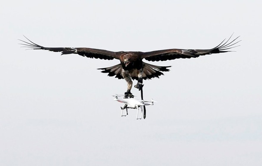 A golden eagle carries a flying drone away during a military training exercise at Mont-de-Marsan French Air Force base, Southwestern France, February 10, 2017. REUTERS/Regis Duvignau - RTX30HNX