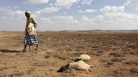 A man walks past the carcass of sheep that died from the El Nino-related drought in Marodijeex town of southern Hargeysa, in northern Somalia's semi-autonomous Somaliland region, April 7, 2016. REUTERS/Feisal Omar/File Photo - RTX2CKK4