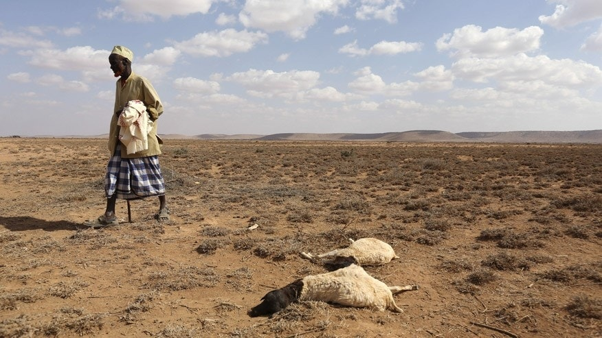 Image result for drought kills many in somalia
