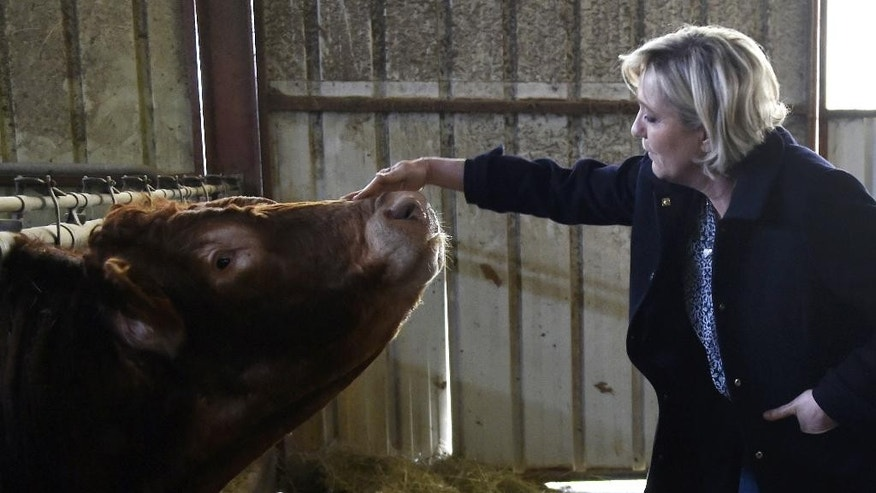 French far-right leader and candidate for the presidential election Marine Le Pen touches a cow as she visits a farm in Cambes, central France, Saturday March 4, 2017. The two-round presidential election is set for April 23 and May 7 (Pascal Pavani, Pool via AP)