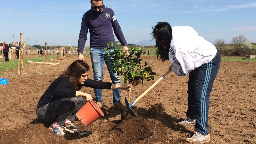 Farmer Rossella Paolini, left, plants a lemon tree with her relatives in their plot of land in Tor Tre Teste neighborhood, Rome, Sunday, March 12, 2017. Dozens of families have started farming plots of land, tilling the soil and planting their first crops as a squatters' gardening initiative has taken root on Catholic Church-owned land with the nominal blessing of Pope Francis. (AP Photo/Nicole Winfield)
