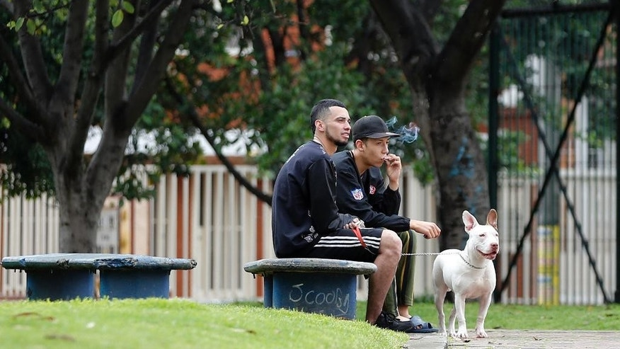 In this March 8, 2017 photo, youths with a pit bull dog smoke marijuana in a park in Bogota, Colombia. A new civil code applied throughout Colombia includes a list of potentially dangerous dogs and sets fines equal to the monthly minimum wage for owners who don't buy an insurance policy for any harm it might cause. Smoking marijuana in a public places is also fined in the new code. (AP Photo/Fernando Vergara)