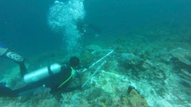 In this undated photo released by Indonesian Maritime Affairs and Fisheries Ministry, divers survey damaged coral reef caused by cruise ship M.V. Caledonian Sky that ran aground earlier this month in the waters of Raja Ampat, Papua province, Indonesia. Indonesia says nearly 19,000 square meters of coral reef was damaged in the pristine waters. (Indonesian Maritime Affairs and Fisheries Ministry via AP)