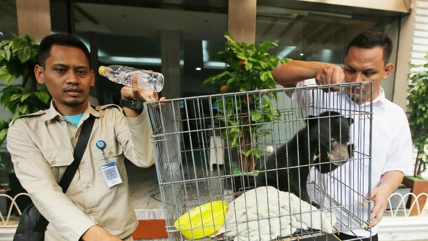 An environment official and a police officer carry in a cage containing an infant sun bear for display during a press conference at Jakarta police headquarters in Jakarta, Indonesia, Tuesday, April 4, 2017. Indonesian police say they saved an infant sun bear, a clouded leopard and a baby orangutan from the wildlife trade after a tip from conservationists who tracked the illegal activities through Instagram. Jakarta police spokesman Prabowo Argo Yuwono said Abdul Malik was arrested Tuesday in a raid on his southern Jakarta house where the animals were found caged. (AP Photo/Achmad Ibrahim)