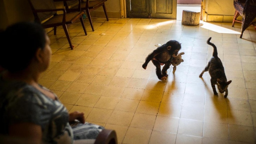 Llanes looks after Anuma II as she plays with the house cat Ty at her apartment in Havana, Cuba.