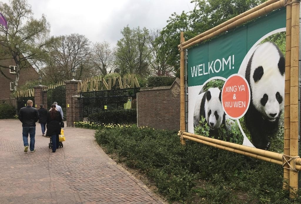 pair of giant panda cubs arrive in netherlands from china