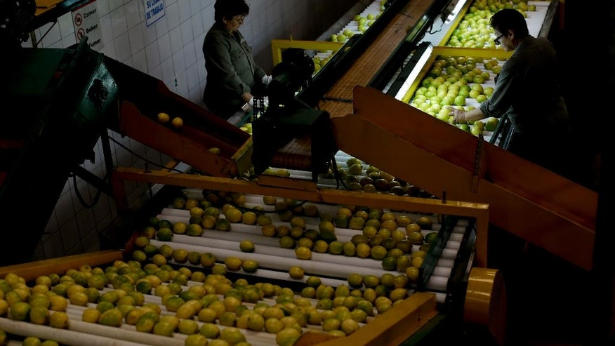 In this April 10, 2017 photo, workers select lemons at a plant in Tucuman, Argentina. Lemons will be a top trade talking point when U.S. President Donald Trump welcomes Argentine President Mauricio Macri in Washington on April 27. Growers in the South American country say the ban on imports of Argentine lemons is about Trump protectionism not sanitary standards. (AP Photo/Natacha Pisarenko)