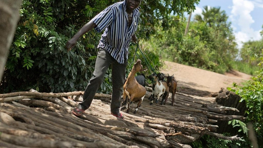 In this Wednesday March 29, 2017 photo, an unidentified man crosses into in Northern Uganda with his goats near Busia, South Sudan. The surge of more than half a million South Sudanese refugees into Uganda since July 2016 has created Africa's largest refugee crisis. (AP Photo/Jerome Delay)