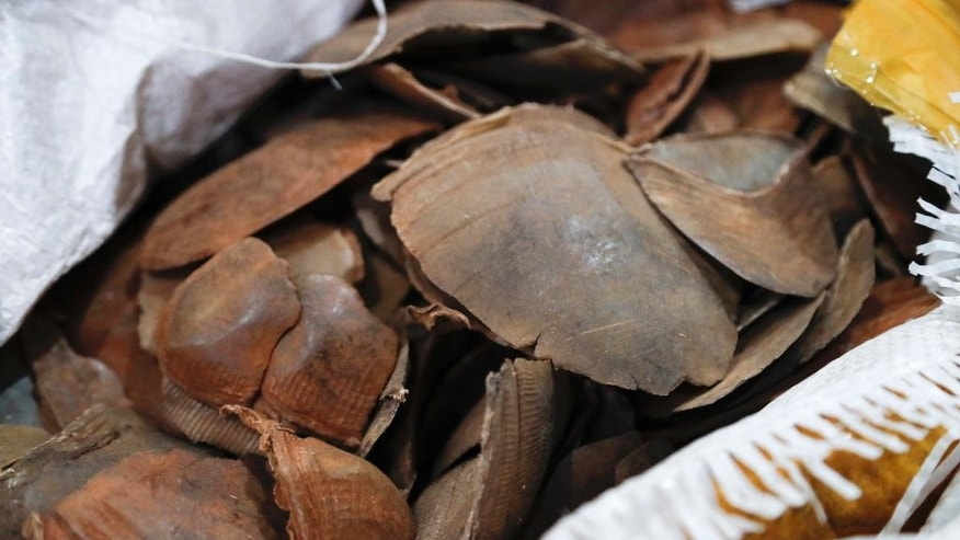 Seized pangolin scales are displayed during a press conference at Customs office in Sepang, Malaysia, Monday, May 8, 2017. Malaysian authorities said hey have seized pangolin scales worth 9.2 million ringgit ($2.1 million) and believed to have been smuggled from Africa. (AP Photo/Vincent Thian)