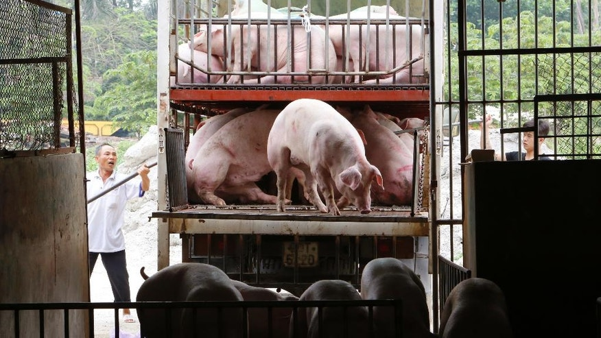 In this Friday, May 5, 2017 photo, pigs are being unloaded to a slaughterhouse in Hanoi, Vietnam. Vietnam is putting pork at the top of menus and promising other help for farmers stricken by a glut and plunging prices. Millions of pig farmers are struggling after China began blocking imports from Vietnam. The crisis has highlighted the risks of depending on a single foreign market, especially such a big one: half of all pork the world eats is consumed in China. (AP Photo/Tran Van Minh)