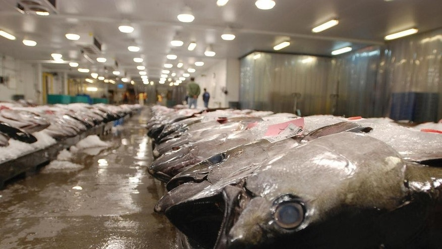 FILE - In this March 23, 2016, file photo, tuna caught by foreign fishermen aboard American boats are lined up at the Honolulu Fish Auction at Pier 38 in Honolulu. Criminal and civil cases allege executives at the largest canned tuna companies were agreeing to collectively raise prices and limit promotions. Major retailers are taking aim at the most popular tuna brands in the U.S. - Chicken of the Sea, Bumble Bee and StarKist - saying they conspired to keep prices high for consumers. (AP Photo/Caleb Jones, File)