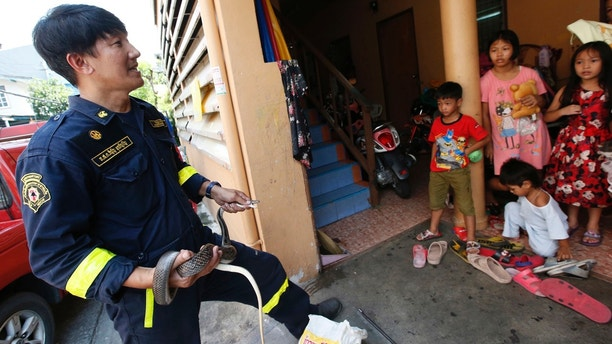 In this Oct. 6, 2017, photo, fireman Phinyo Pukphinyo, left, holds a sunbeam snake after catching at a house in Bangkok, Thailand. When the latest distress call came into Phinyo Pukphinyo's fire station in Bangkok, it was not about a burning home or office building. Instead, the caller needed urgent help with a far more common problem facing Thailand's capital: snakes. City authorities say the number of snakes caught in Bangkok homes has risen exponentially in recent years, from 16,000 reported cases in 2013 to about 29,000 in 2016. Figures for the first half of 2017 are over 30 percent higher than last year. (AP Photo/Sakchai Lalit)