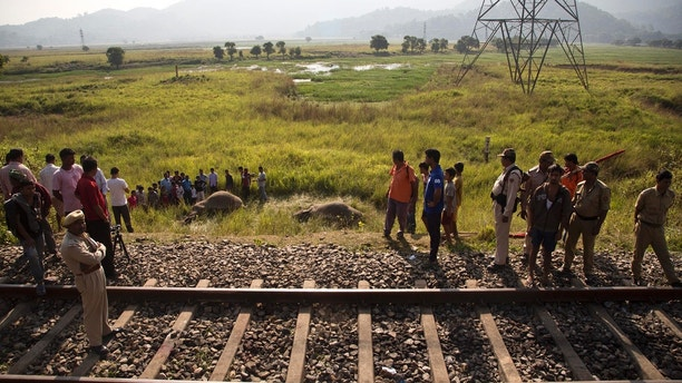Indian villagers look the carcass of two endangered Asian elephants that were hit and killed by a passenger train near a railway track in Thakur Kuchi village on the outskirts of Gauhati, Assam state, India, Sunday, Nov. 19, 2017. Wildlife warden Prodipta Baruah says the elephants were part of a herd of about 15 that had ventured into the area in search of food before dawn Sunday. (AP Photo/Anupam Nath)