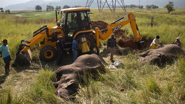 An excavator digs soil to bury the carcass of two endangered Asian elephants that were hit and killed by a passenger train near a railway track in Thakur Kuchi village on the outskirts of Gauhati, Assam state, India, Sunday, Nov. 19, 2017. Wildlife warden Prodipta Baruah says the elephants were part of a herd of about 15 that had ventured into the area in search of food before dawn Sunday. (AP Photo/Anupam Nath)