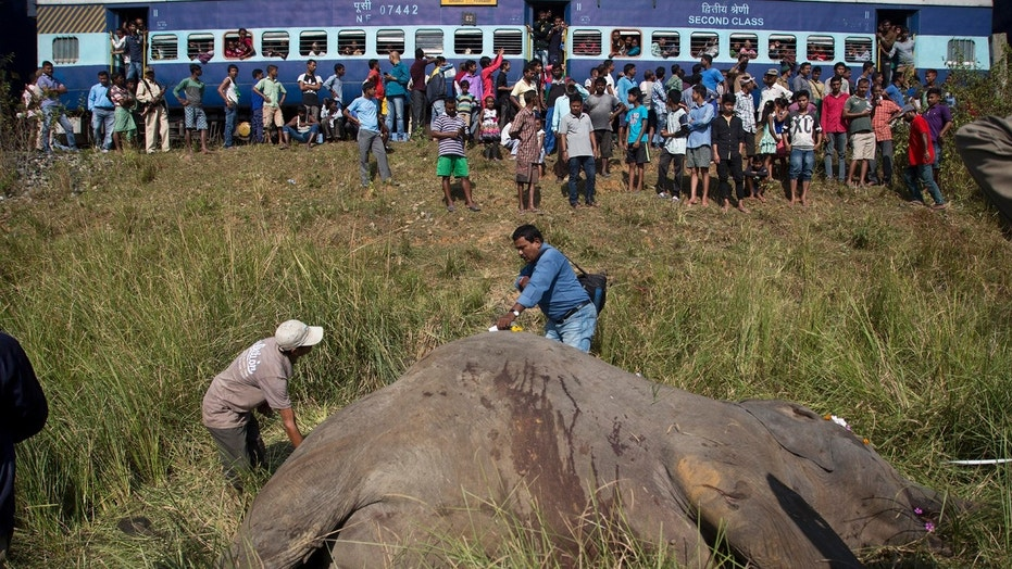 A passenger train passes as Indian vets measure the carcass of two endangered Asian elephants that were hit and killed by a passenger train near a railway track in Thakur Kuchi village on the outskirts of Gauhati, Assam state, India, Sunday, Nov. 19, 2017.