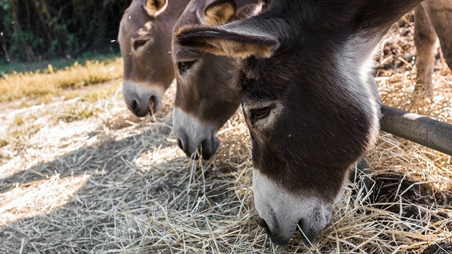 Police arrest donkeys for eating 'expensive plants'