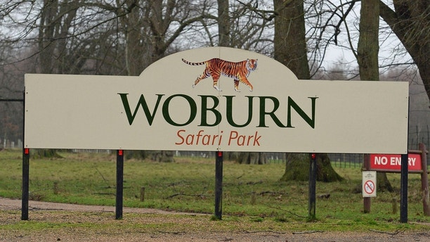 The sign for the  Woburn Safari Park in Woburn England Tuesday Jan. 2, 2018 . Officials say 13 monkeys have died in a fire at the safari park. The fire started early Tuesday morning in the monkey house at Woburn Safari Park.  A spokesman said staff and fire crews rushed to the scene but the 13 monkeys could not be saved. (John Stillwell/PA via AP)