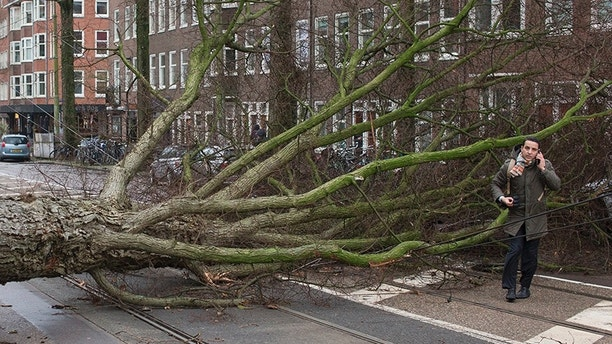 A man who escaped unharmed makes a phone call after his scooter was hit by a crashing tree uprooted by heavy winds in Amsterdam, Netherlands, Thursday, Jan. 18, 2018. Scores of flights and trains were cancelled in The Netherlands and drivers were warned to stay off the roads as the country took a powerful hit of a storm which was set to lash large parts of Europe. (AP Photo/Peter Dejong)