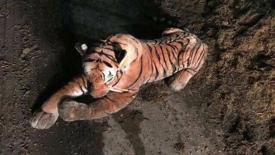 This toy tiger sparked a nearly hour-long stand off with police in Scotland.