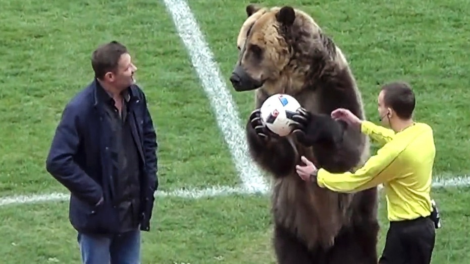 A bear performs before a Russian Second League soccer match.