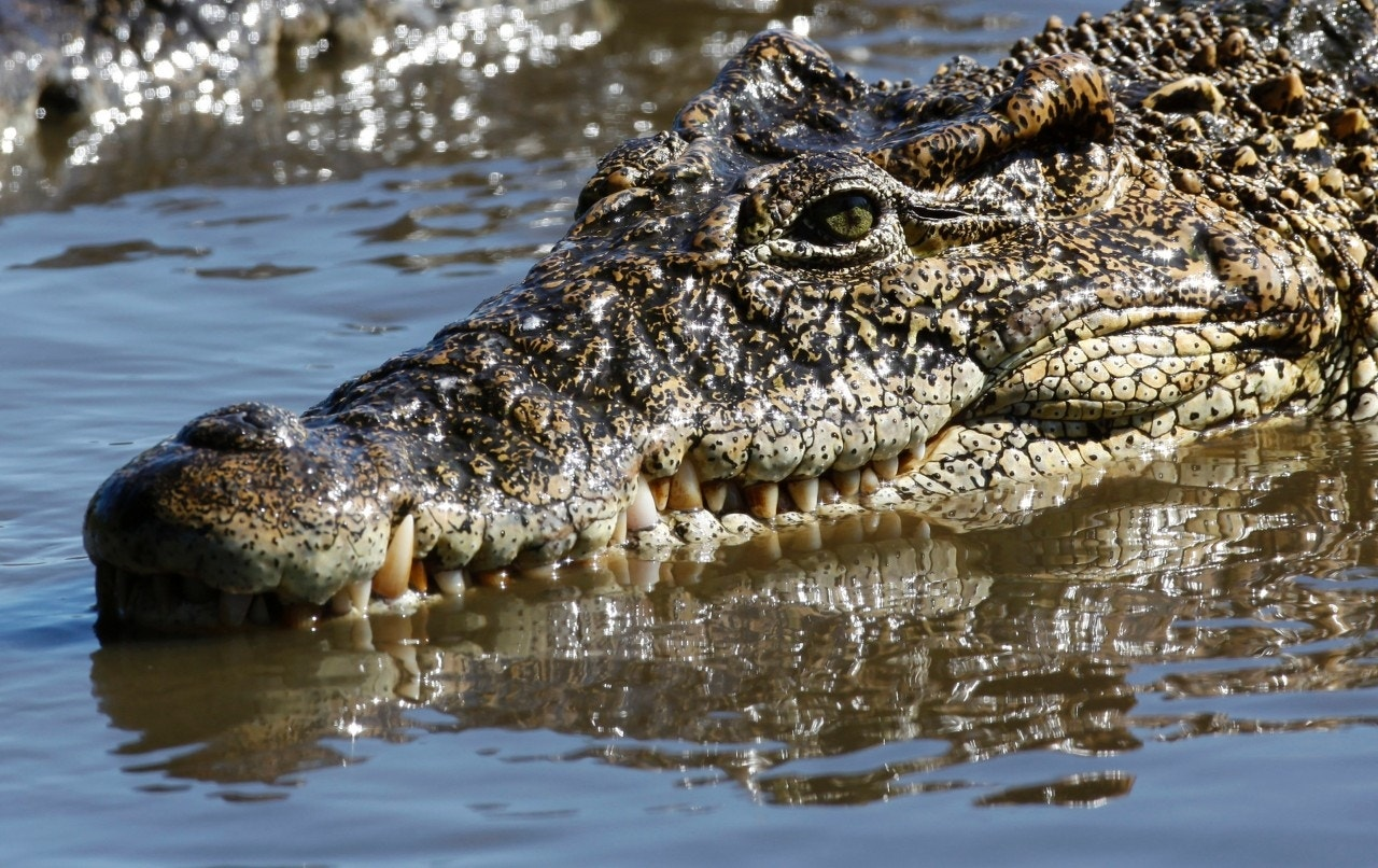 Pastor killed by crocodile during water baptism