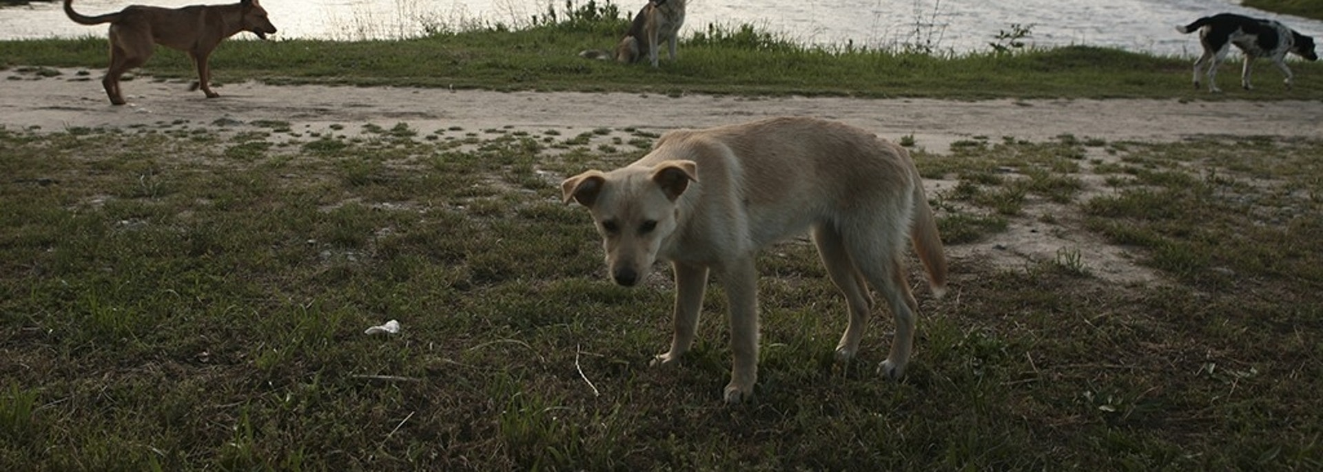 Stray dogs are seen at a park, with the Fisht Stadium seen in the background, in Sochi, the host city for the 2018 FIFA World Cup, Russia May 18, 2018. REUTERS/Kazbek Basayev - UP1EE5I1TQE5I