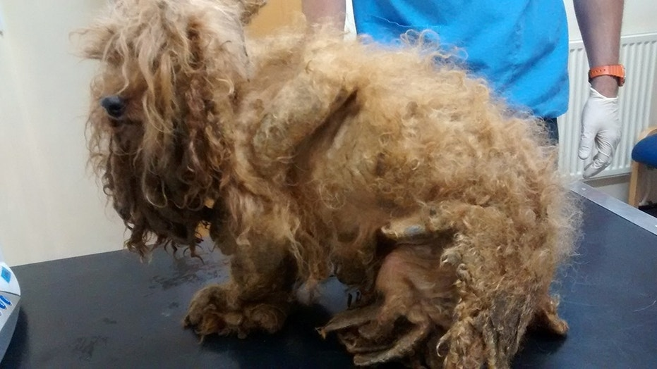 Benji had badly matted fur and his paw had rotted off, according to officials.
