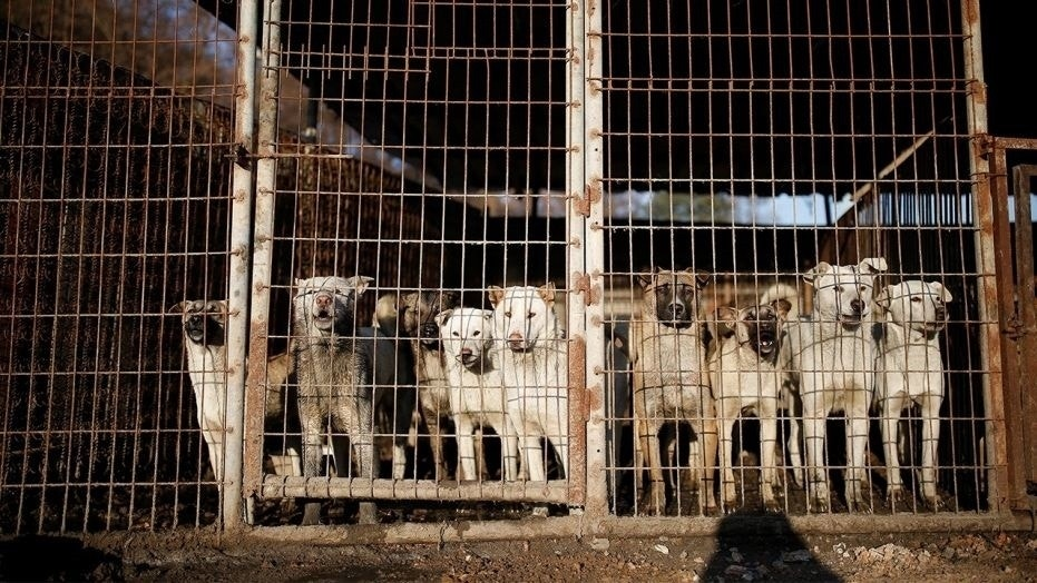 A South Korean court ruled for the first time that it's illegal to kill dogs for their meat, a decision that activists hope will pave the way to making the controversial practice illegal, reports said.