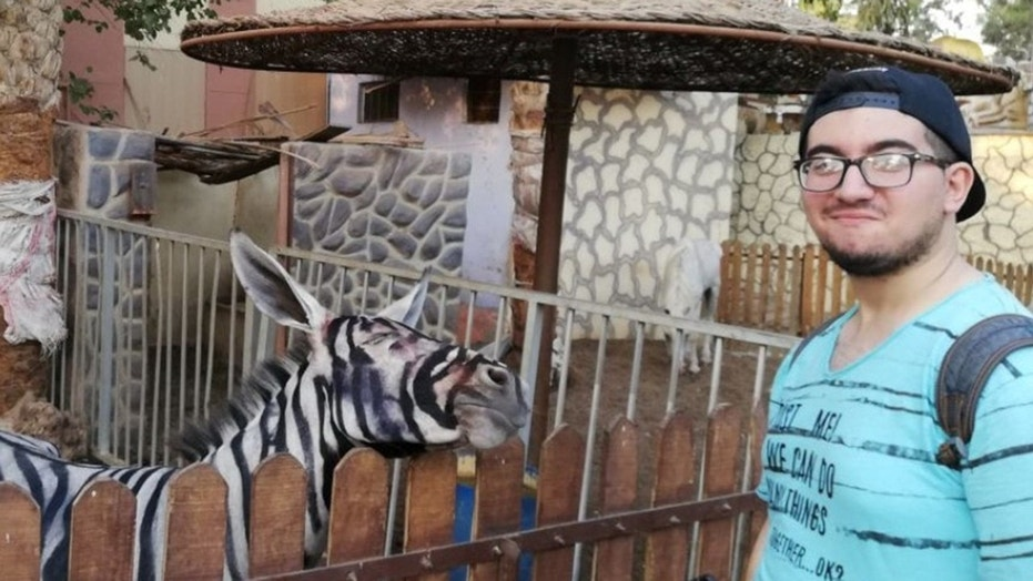 Egyptian zoo denies their 'zebra' is a donkey after photo goes viral