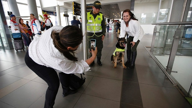 A woman posing on Thursday, July 26, 2018, at El Dorado airport in Bogota, Colombia, for a photo with drug dog Sombra Sombras Detective work is now needed more than ever as Colombia wrestles with the fast-paced cocaine production traditionally testing close relationships with the United States. (AP Photo / Fernando Vergara)