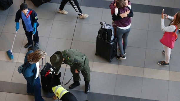 Drug Dog Sombra inspects a suitcase at El Dorado Airport in Bogota, Colombia, on Thursday, July 26, 2018. On a typical day, Sombra left at 6am and drove from a kennel to El Dorado Airport for parcels and to examine cargo. With her neon-reflective vest, pointed ears, and gaping mouth, she looks more like a beloved family dog than an old drug detection dog. (AP Photo / Fernando Vergara)