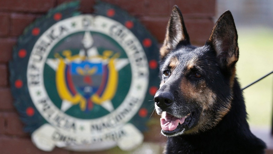 Drug dog Sombra has helped discover more than 2,000 kilos of cocaine in suitcases, boats and large fruit juices.