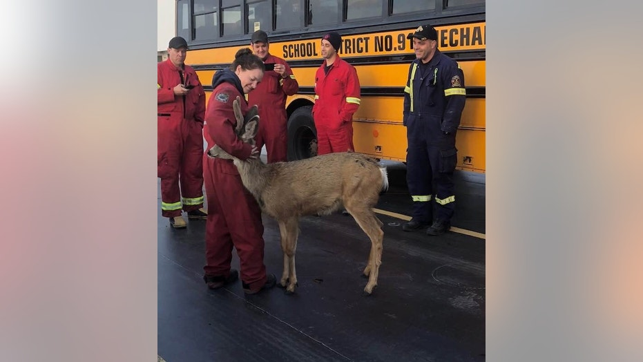 A deer was spotted cozying up with a firefighter in British Columbia, Canada, last week.