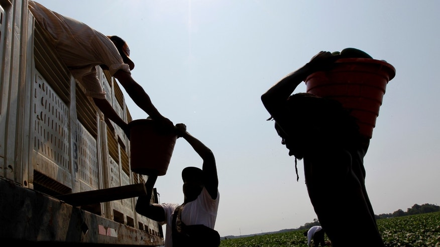 In this June 16, 2011 photo, farm workers load a truck with cucumbers on a farm in Leslie, Ga. Just weeks after Georgia Gov. Nathan Deal signed one of the toughest laws in the country cracking down on illegal immigration, the Republican conservative said probation workers could take the jobs of illegal immigrants whom farmers say are no longer showing up for work for fear they could be deported.  (AP Photo/John Bazemore)