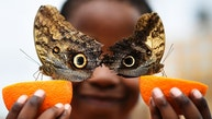 Bjorn, aged 5, smiles as he poses with a Owl butterfly during an event to launch the Sensational Butterflies exhibition at the Natural History Museum in London, Britain March 23, 2016.   REUTERS/Dylan Martinez  TPX IMAGES OF THE DAY  - RTSBUE3