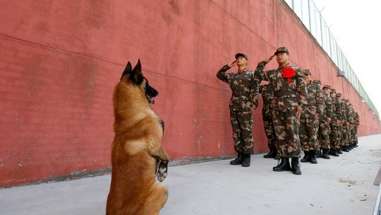 An army dog stands up as retiring soldiers salute their guard post before retirement in Suqian, Jiangsu province, China November 28, 2017. Picture taken November 28, 2017. REUTERS/Stringer ATTENTION EDITORS - THIS IMAGE WAS PROVIDED BY A THIRD PARTY. CHINA OUT. NO COMMERCIAL OR EDITORIAL SALES IN CHINA     TPX IMAGES OF THE DAY - RC1BAEFBAB40