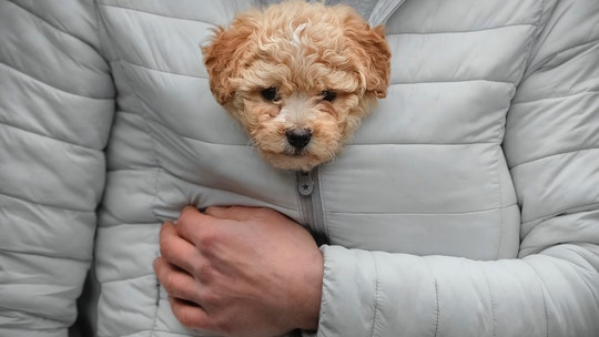 A man keeps a puppy warm in his jacket while watching a parade of new year's traditions in Comanesti, northern Romania, Saturday, Dec. 30, 2017. (AP Photo/Vadim Ghirda)
