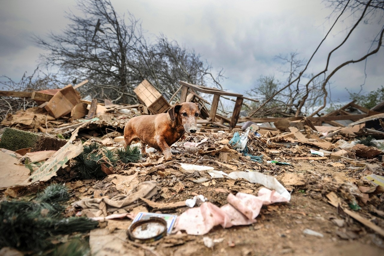 Rusty walks among debris after a violent storm swept through an area in northern Limestone County, near Ardmore, Ala., March 20, 2018