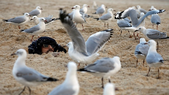 Seagulls surround a man who was buried by his friends in sand and crackers at Bondi Beach in Sydney, Australia April 20, 2018. REUTERS/Edgar Su     TPX IMAGES OF THE DAY - RC14E66EBD40