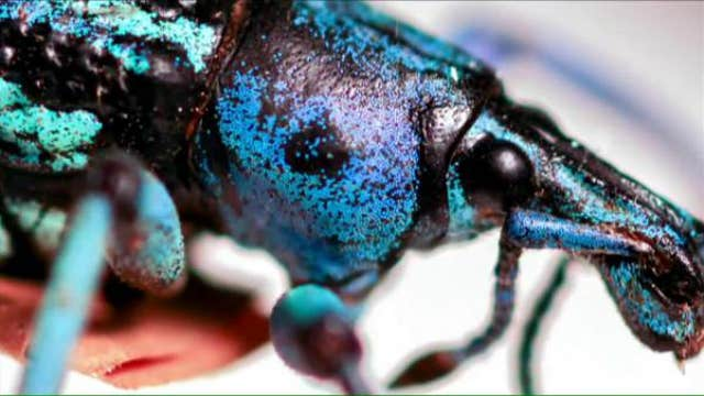 Inheriting the world's largest privately-owned bug collection