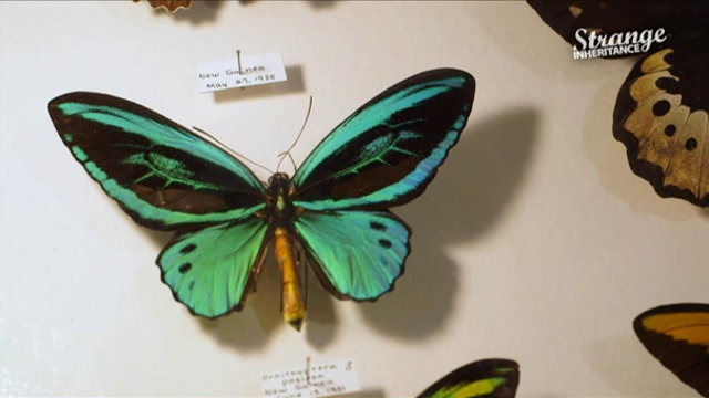 Family inherits a bug collection…worth millions